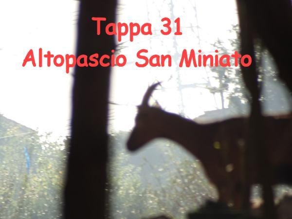 Tappa 31